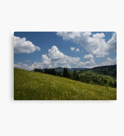 Wildflower Meadow in the Mountain Canvas Print