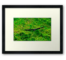 Black Eagle. Framed Print