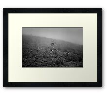 The Lonely Moor Framed Print