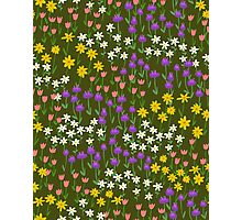 Green Field of Flowers Photographic Print