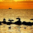 Baltic Sea morning birds by jchanders