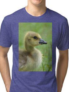 Baby Goose Feeding on Grass Tri-blend T-Shirt