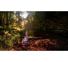 Lydford Gorge II Photographic Print