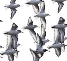 Sanderlings and Dunlins in Flight Sticker