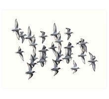 Sanderlings and Dunlins in Flight Art Print