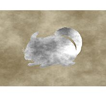 Rustic Chinchilla Art Photographic Print