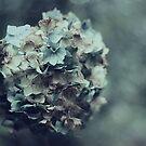 Pretty in Pastel by Karen Tregoning