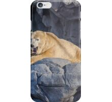 Sea World Polar Bear Hudson iPhone Case/Skin