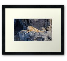 Sea World Polar Bear Hudson Framed Print