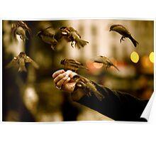 Best Image for Prints, Cards, Poster, Calender  Poster