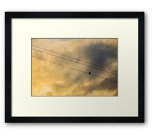 Out On a Wire Framed Print