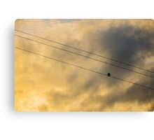 Out On a Wire Canvas Print
