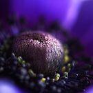 deep purple by lucyliu