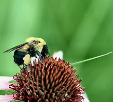 Pollen Collecting by Keala