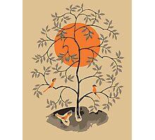 Zen Tree Photographic Print