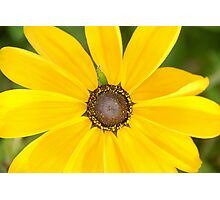 Yellow Summer Photographic Print