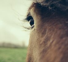 Brown Horse Eye Closeup by PatiDesigns