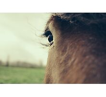 Brown Horse Eye Closeup Photographic Print
