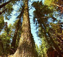 Sequoia tree by ikshvaku