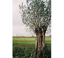 Pollard Willow In The Wind Photographic Print