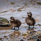 Doing the Duck Walk by vivsworld
