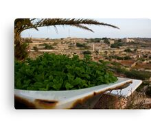 Mint in a Community Garden in Malta Canvas Print