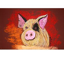 Pig with personality Photographic Print