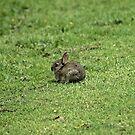Rabbit- Billsborough by SophieGorner7
