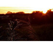 The reed bed Photographic Print