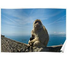 Momma Monkey with Baby in Gibraltar Poster