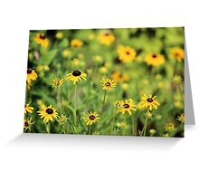 Field of Susans Greeting Card
