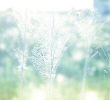 Dry field plants in a bright sun light with gossamer by Sviatlana Kandybovich