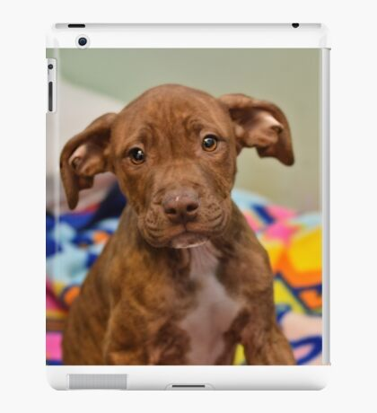 Pit Bull Mix Puppy  iPad Case/Skin
