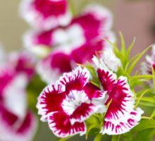 Summer Wildflower Sticker