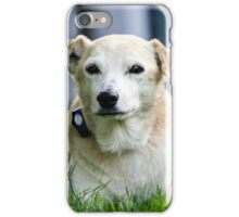 Lab Rescue Senior iPhone Case/Skin