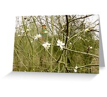 Delamere Forest Fairy Greeting Card