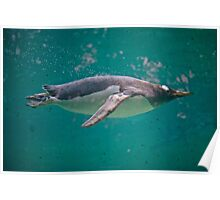 Swimming with Penguins Poster