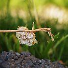 Flowers by SophieGorner7