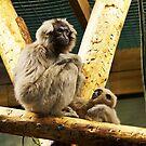 Monkey by SophieGorner7