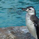 Penguin by SophieGorner7
