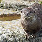 Otter by SophieGorner7