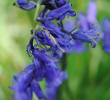 Bluebells in the Wind by queenabb13