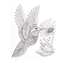 Tangled Hummingbird Photographic Print