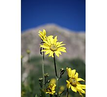 Wildflowers in front of mountains Photographic Print