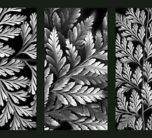 Filigree Fern Triptych by Jessica Jenney