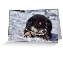 dog puppy Greeting Card