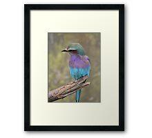 Fabulous Colours Framed Print