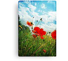 Norfolk Poppies .. Canvas Print
