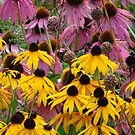 Flowers Pink & Yellow  by lorilee
