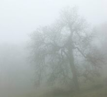Ghostly Oak In Fog - Central California by Ram Vasudev